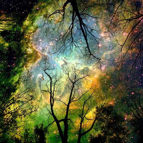 cosmos2.34153234_large